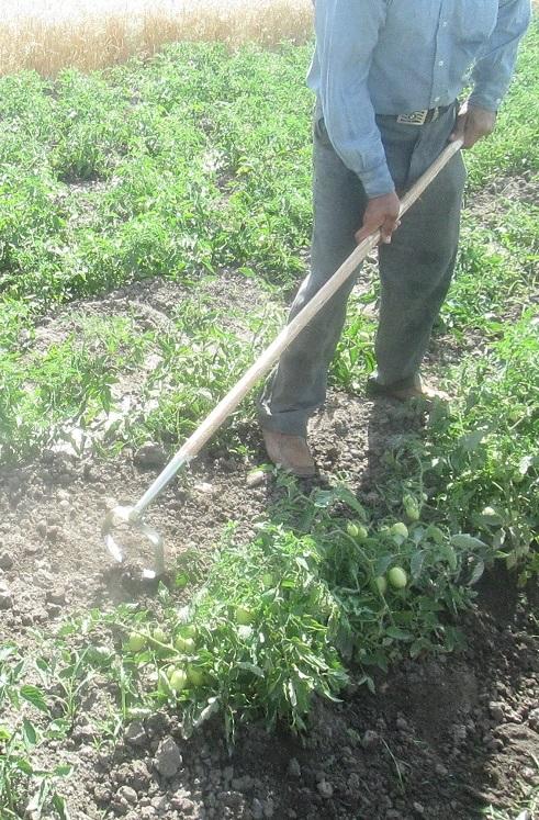 وجین علف های هرز مزرعه با وجین کن نوسانی فن کاوش